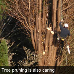 tree pruning is also caring